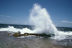Wave_sm@body